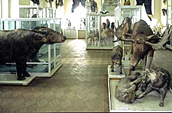 Kazan Russia State University Zoological museum 1st photo