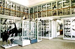 Kazan Russia State University Zoological museum 3rd photo