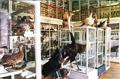 Kazan Russia State University Zoological museum 4th photo